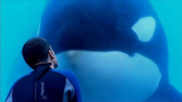 blackfish movie review Blackfish is a documentary film directed by gabriela cowperthwaite, that critically analyses the deaths of trainers by a killer whale named tilikum this psychological thriller is simultaneously horrifying and captivating echoing the neglected notion that 'nature cannot be tamed.