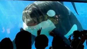 002 blackfish